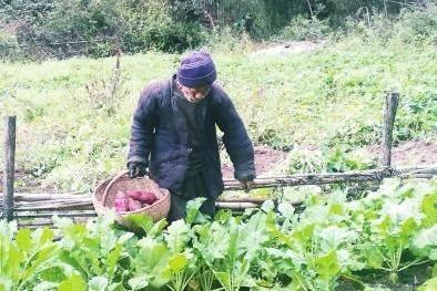 王天义在田间劳作